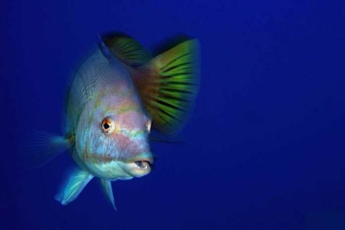 fauna marina en Las Canarias, los mejores lugares para hacer submarinismo y snorkel en Las Canarias