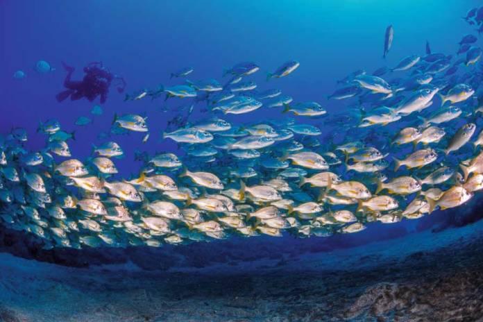 Hacer submarinismo y snorkel en Las Camarias