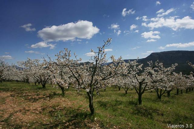 cerezos en flor en el Valle de las Caderechas