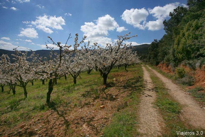 ruta de los cerezos en el Valle de las Caderechas