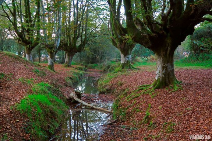 que ver en Gorbea, bosque de Otzarreta