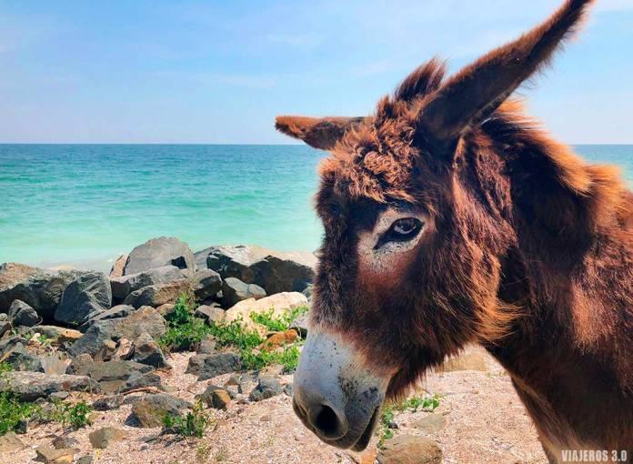 Qué ver en Rumanía, costa del Mar Negro