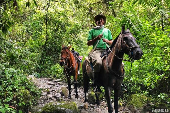 Valle de Cocora, caballos en el Eje Cafetero