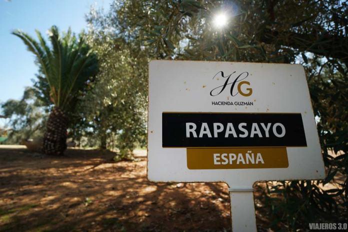 Olivoteca en Hacienda Guzmán, oleoturismo en Sevilla