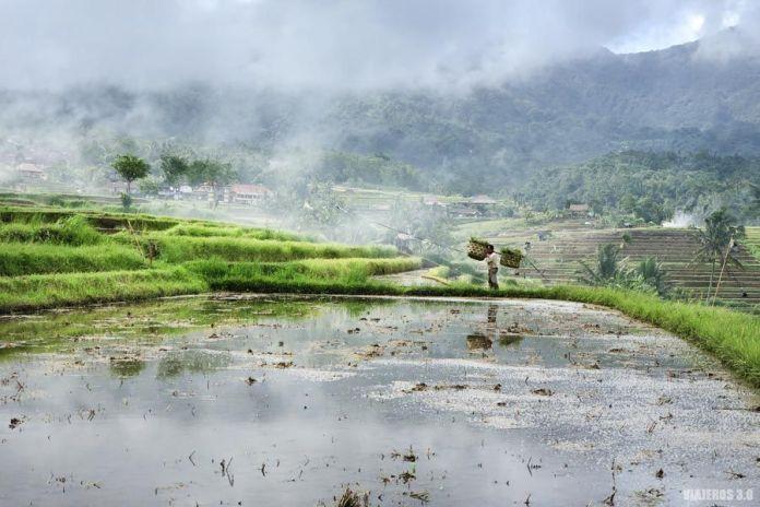 Arrozales deJatiluwih, qué visitar en Bali en una semana
