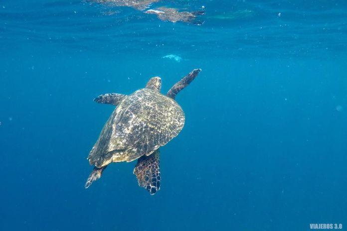 Snorkel con tortugas, qué hacer en las islas Gili