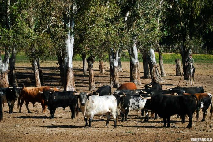Ruta del Toro Bravo, qué ver en Medina Sidonia