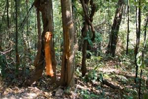 sendero de los monjes Chiang Mai