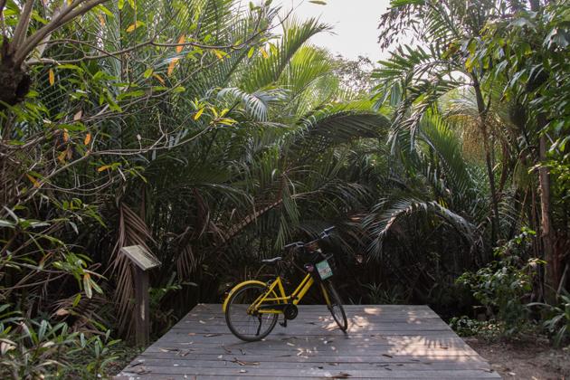 bang krachao - jardin botánico bangkok