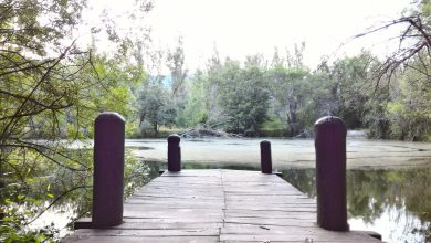 Photo of Bosque de Finlandia, Monasterio del Paular y Puente del Perdón (Rascafría, Madrid). Espectacular ruta senderista – Vol.3.