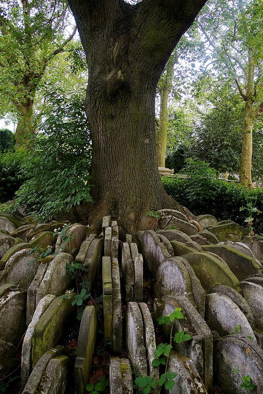 El árbol Hardy