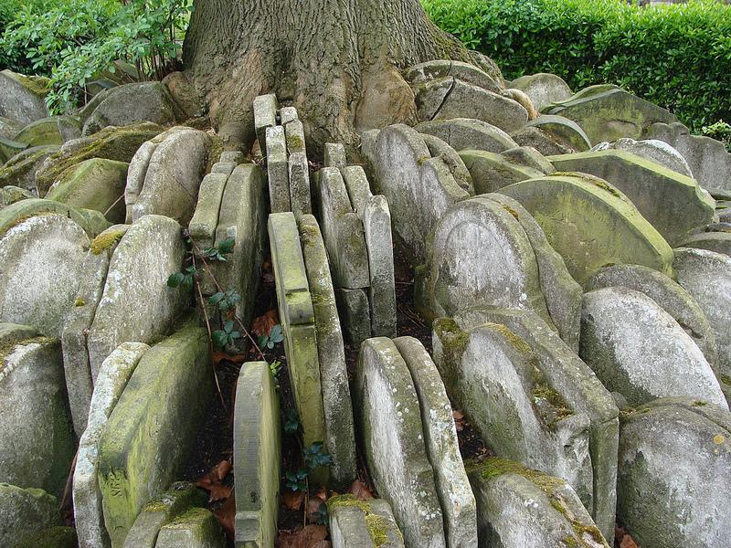 The Hardy Tree