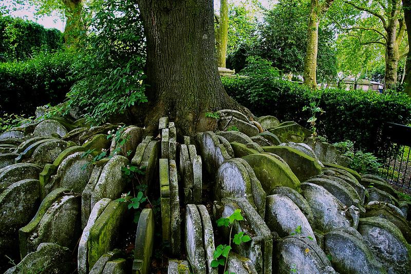El árbol Hardy: una obra temprana de un Gran Novelista