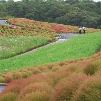 Parque Costero Hitachi: Un Paraíso Floral