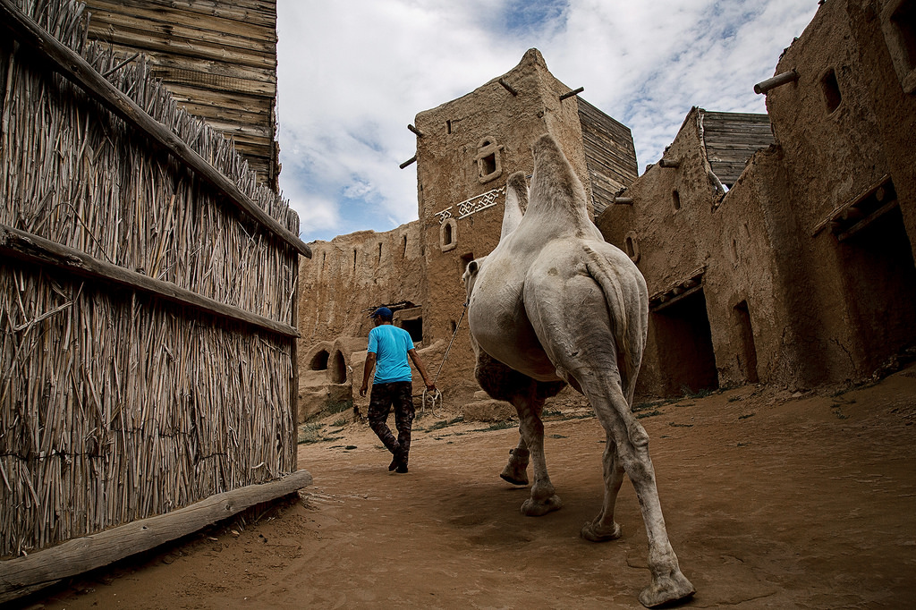 Camel in Sarai-Batu