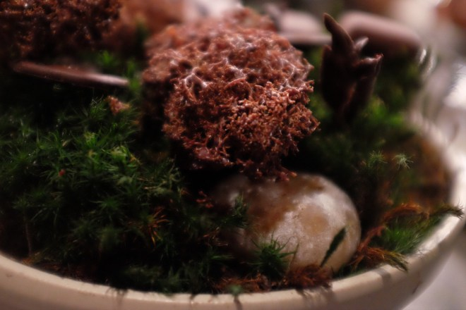 Chocolate moss, Noma