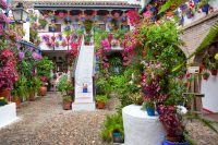 20 fotos que explican la belleza de los patios de Crdoba ...