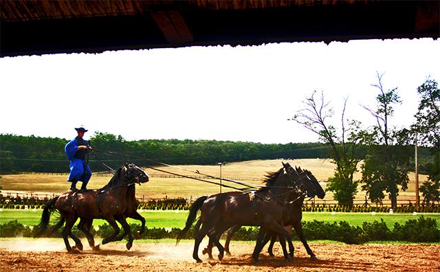 Jinete en pie caballos salvajes exhibición Puszta gran llanura Hungría