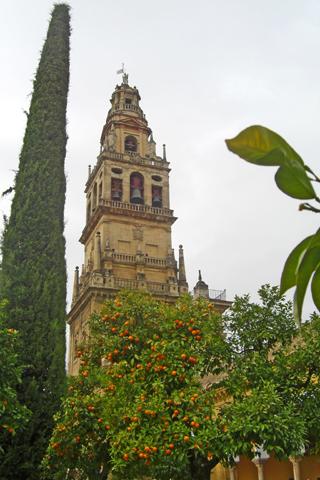 Torre Mezquita Catedral Patio Naranjos Córdoba