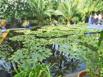 Piscina nenúfares Jardín Majorelle du Yves Saint Laurent Marrakech