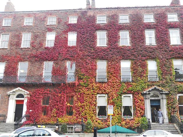 Fachada enredadera plantas colores centro histórico Dublín