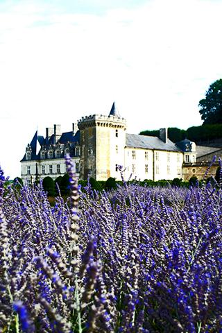 Lavanda jardines Villandry Francia