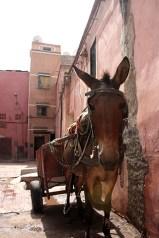 Carro burro transporte medina Marrakech