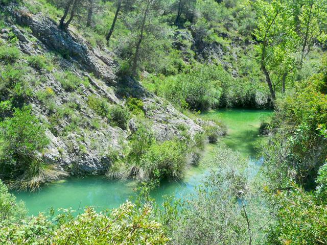 Río vegetación Barranco Encanta Planes Alicante