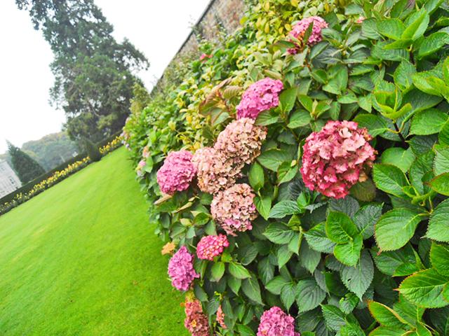 Flores colores jardín Powerscourt