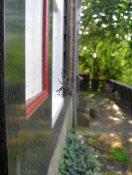 Tela araña vivienda Marken Holanda