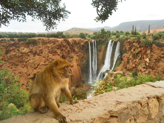 Mono muro cascadas Ouzoud Marruecos