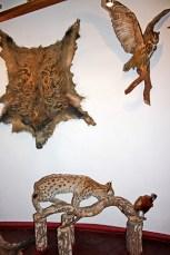 Pieles jabalí animales caza disecados pared castillo
