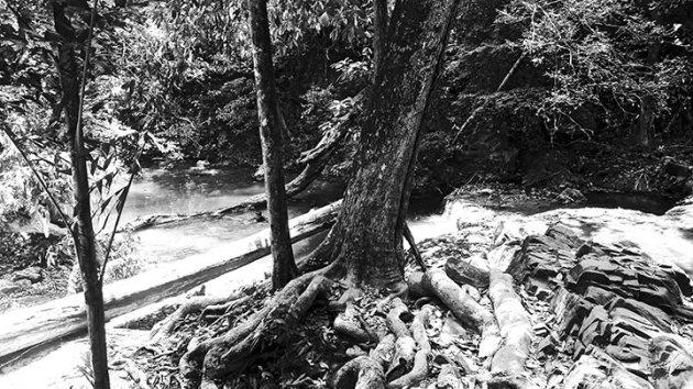 Foto blanco y negro vegetación Cascadas Parque Natural Erawan