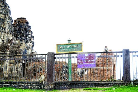 Monos subidos valla comiendo Pgra Prang San Yod Lopburi