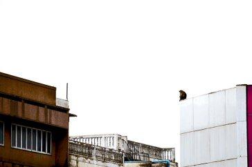 Mono sentado borde tejado edificio Lopburi