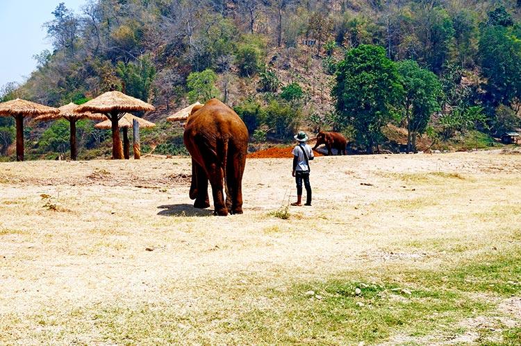 Elefante culo espaldas cuidador Elephant Nature Park Chiang Mai