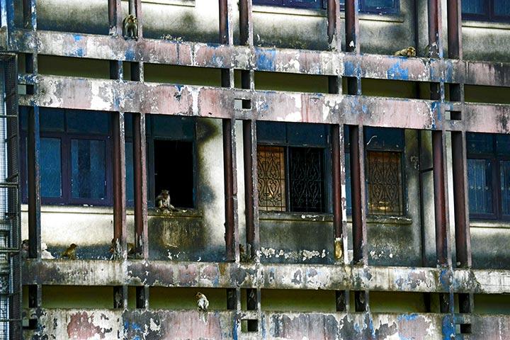 Monos trepando edificio ventanas centro Lopburi