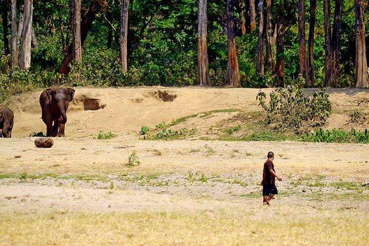 Elefante negro lejos cuidador tailandés Elephant Nature Park Chiang Mai