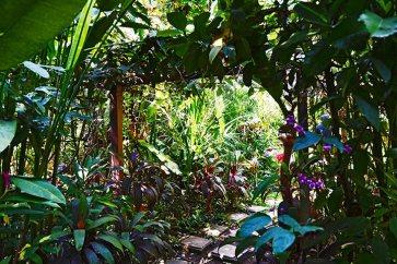Oásis vegetación jardín exótico Lopburi Tailandia