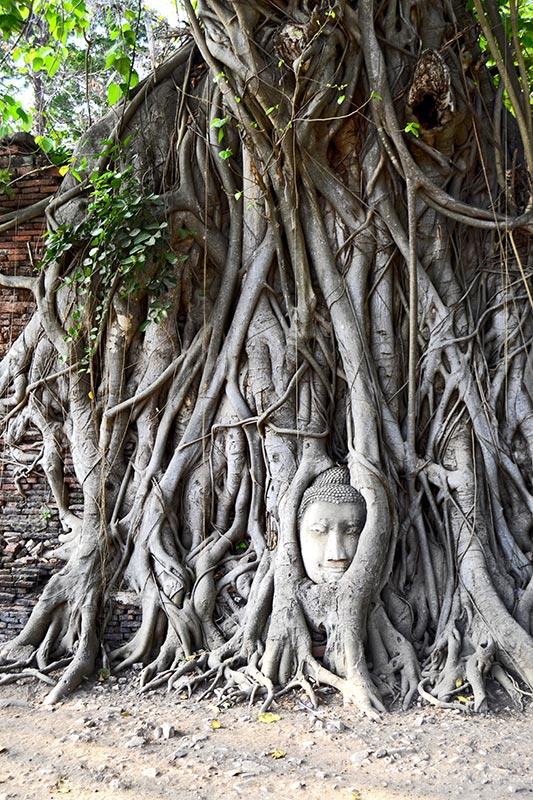 Cabeza buda árbol sagrado raíces Ayutthaya
