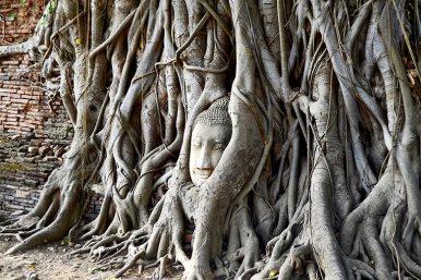 Cabeza buda sagrado árbol Wat Mahathat Ayutthaya Tailandia