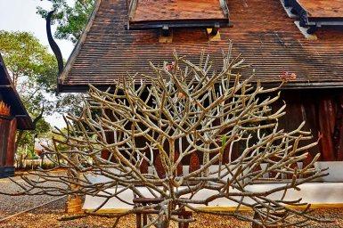 Árbol sagrado patio Casa Negra Chiang Rai