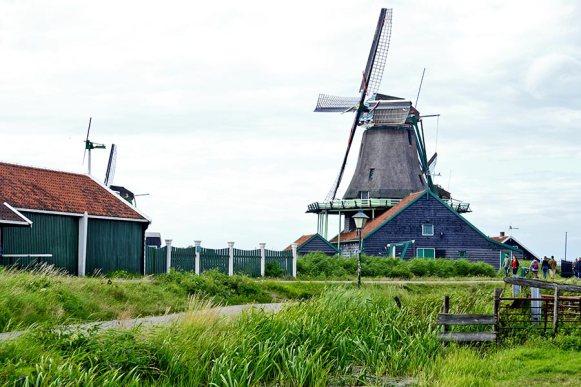 Molino aceite Zaanse Schaans césped