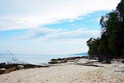 Playa solitaria arena troncos madera Phi Phi Island Tailandia