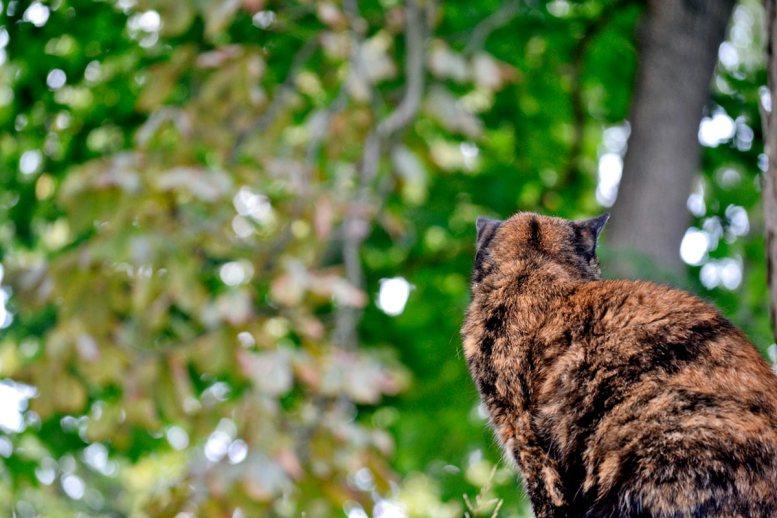 Gato atigrado espaldas bosque parque natural Fjaderholmarna Suecia