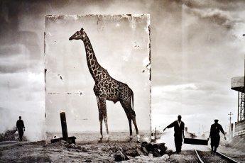 Fotografía jirafa África denuncia social exposición Nick Brandts Fotografiska Estocolmo