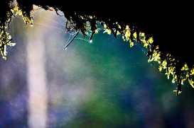 Detalle gotas agua cayendo musgo vegetación Cascada de Triberg Selva Negra Alemania