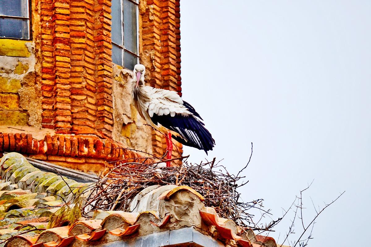 Cigüeña primer plano nido iglesia Colegiata de San Miguel Alfaro La Rioja