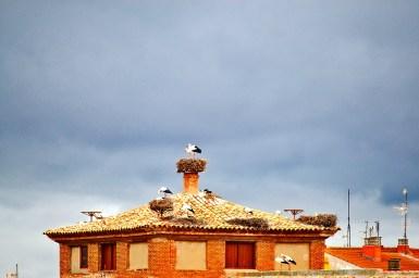 Tejados vivienda nidos cigüeñas cielo lluvia Alfaro La Rioja