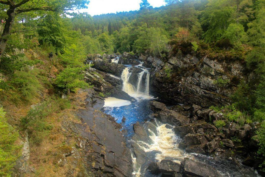 Roggie falls